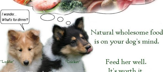 dog food natural nutrition pet foods holistic diet