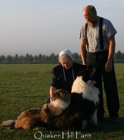 Bill and Kimberly Anne with their farm Collies during filming by Animal Planet at Quaker Hill Farm.