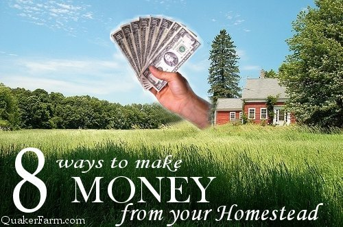 Make money from your homestead